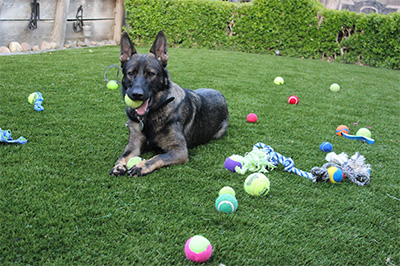 synthetic lawn pet grass